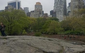 From Rat to Umpire: A Central Park Journey
