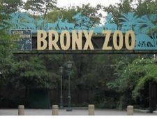 Ota Benga: The Pygmy in the Bronx Zoo