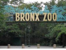 Ota Benga: The Pygmy in the Bronx Zoo